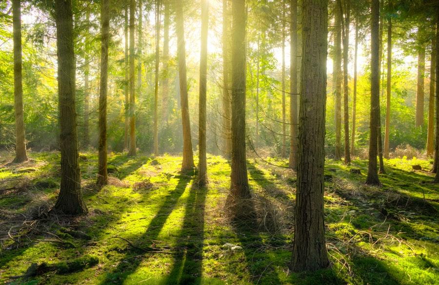 Magyarország erdei: 20 varázslatos erdő, érdemes ellátogatni | xForest